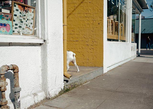 dog in doorway.  Portland, OR