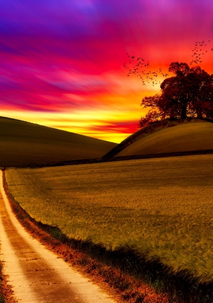 Path into Brilliant Sunset