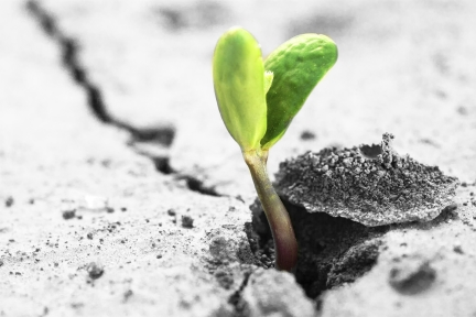Green bean sprout growing through a crack