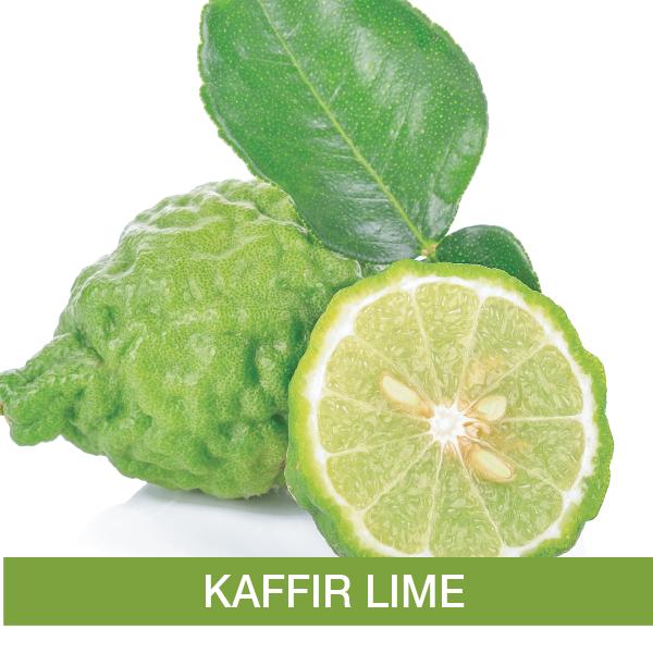 Kafir Lime