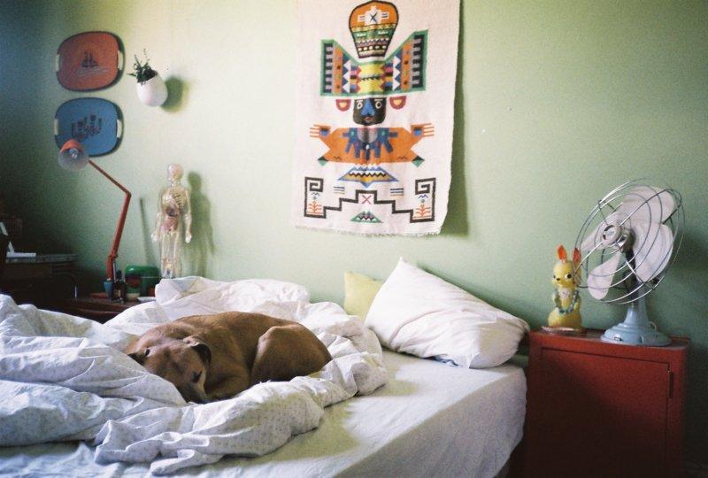 dog-on-bed.jpg