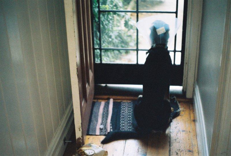 dog-wearing-cone-sitting-at-door.jpg