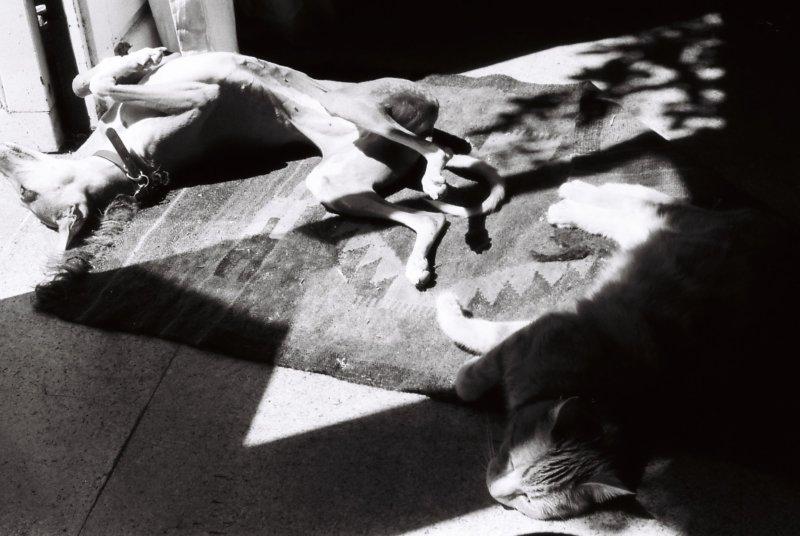 dog-lying-in-sunshine-with-cat.jpg