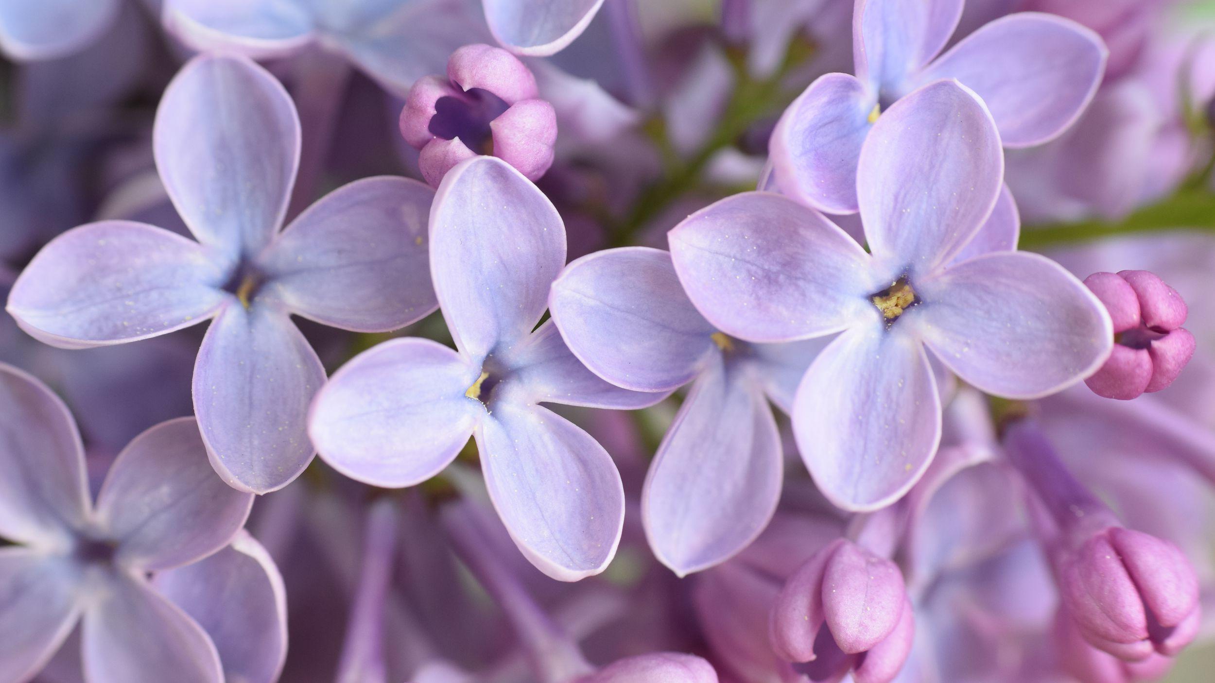 17f7204c4333bc265bb7f1e1d47a2f7f--plant-catalogs-seed-pods.jpg