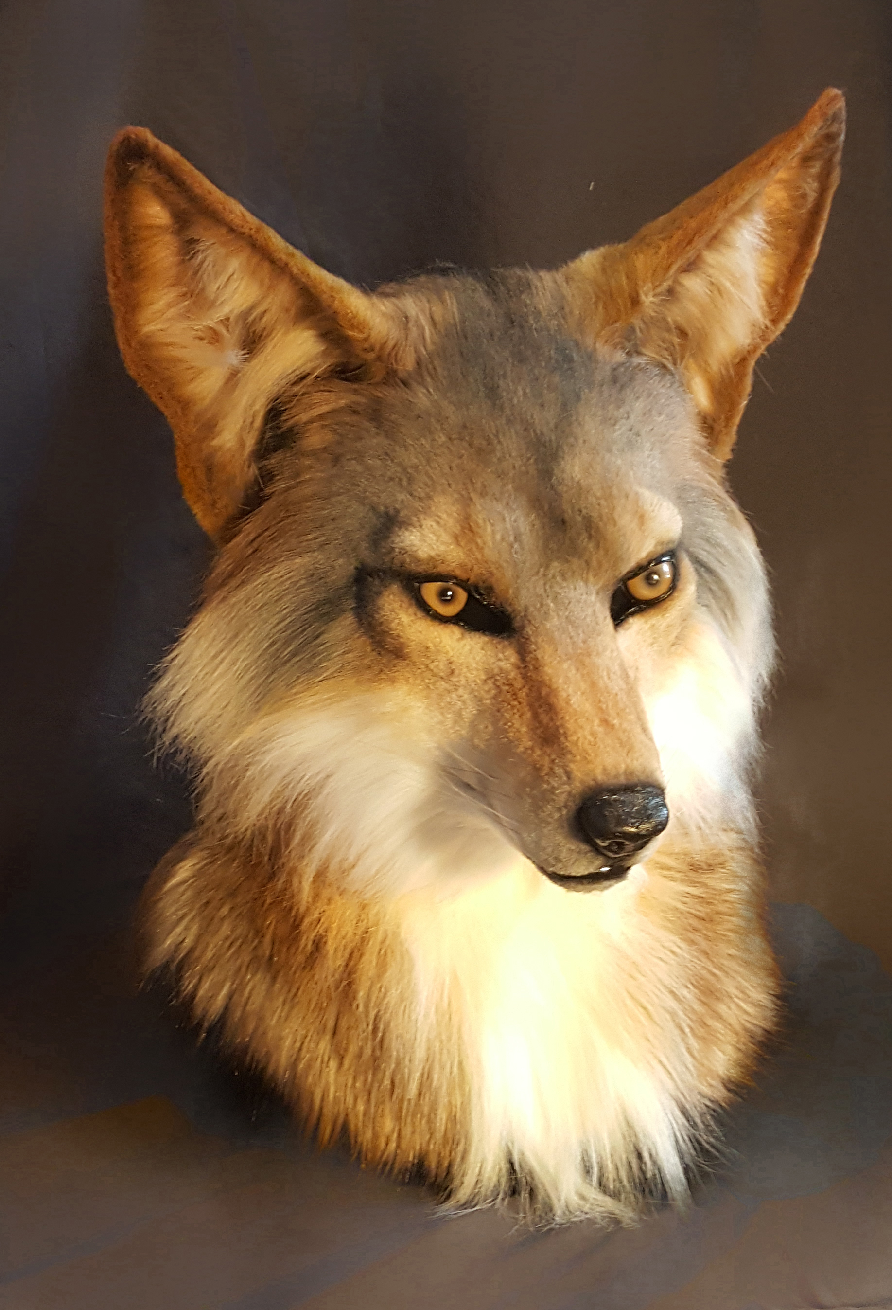 Coyote Head - $2300 - Features Include:moving jaw3 fur colorscustom airbrushing