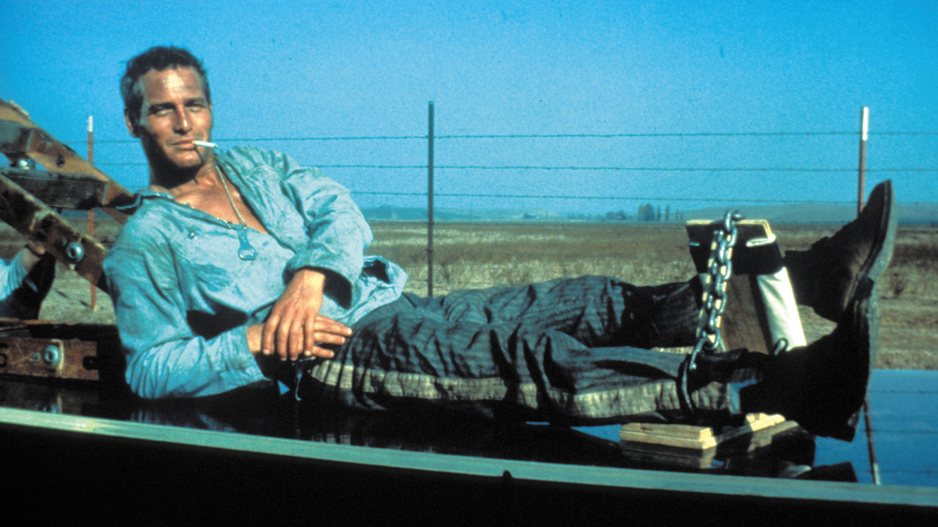 4.) It's a major (but modest) movie star. Pictured: Paul Newman as Cool Hand Luke.