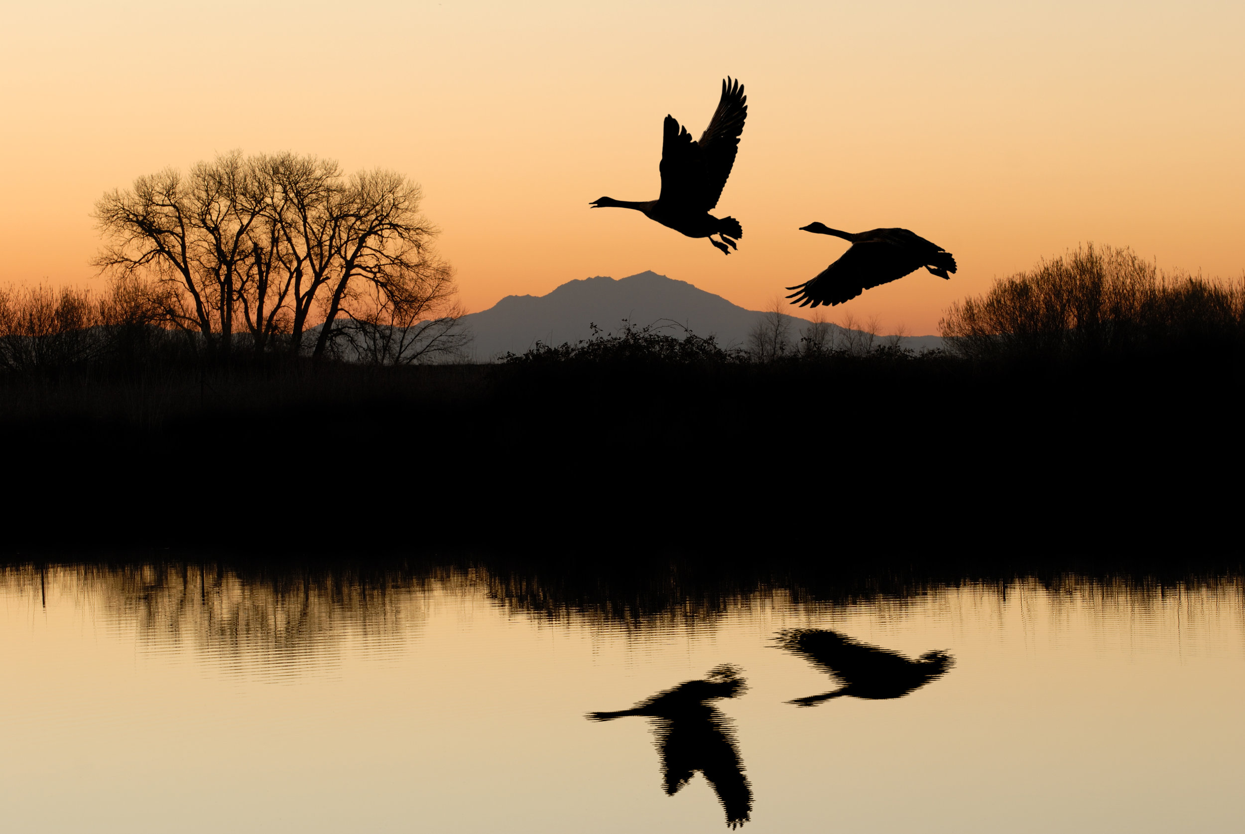 6.) It's on the Pacific Flyway.