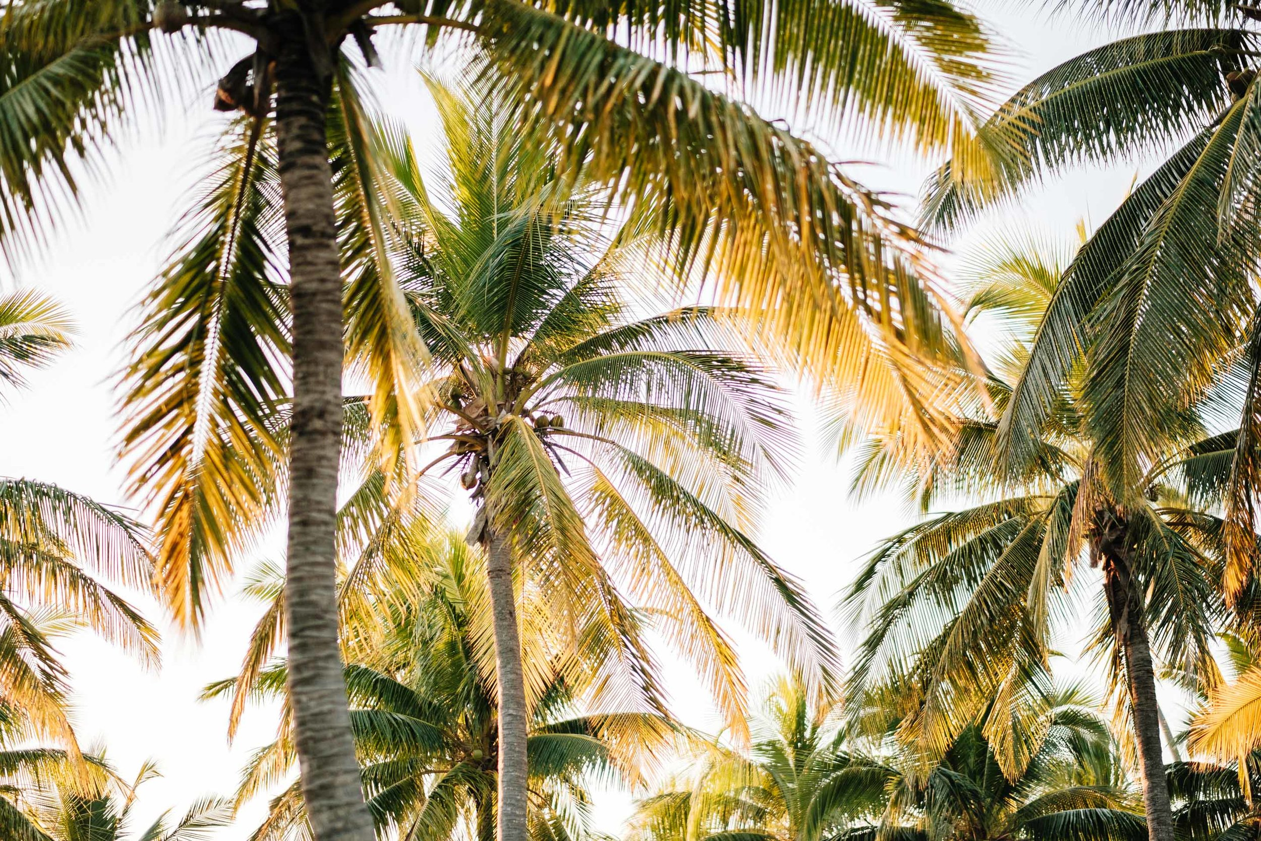 the coconut trees above the wedding venue