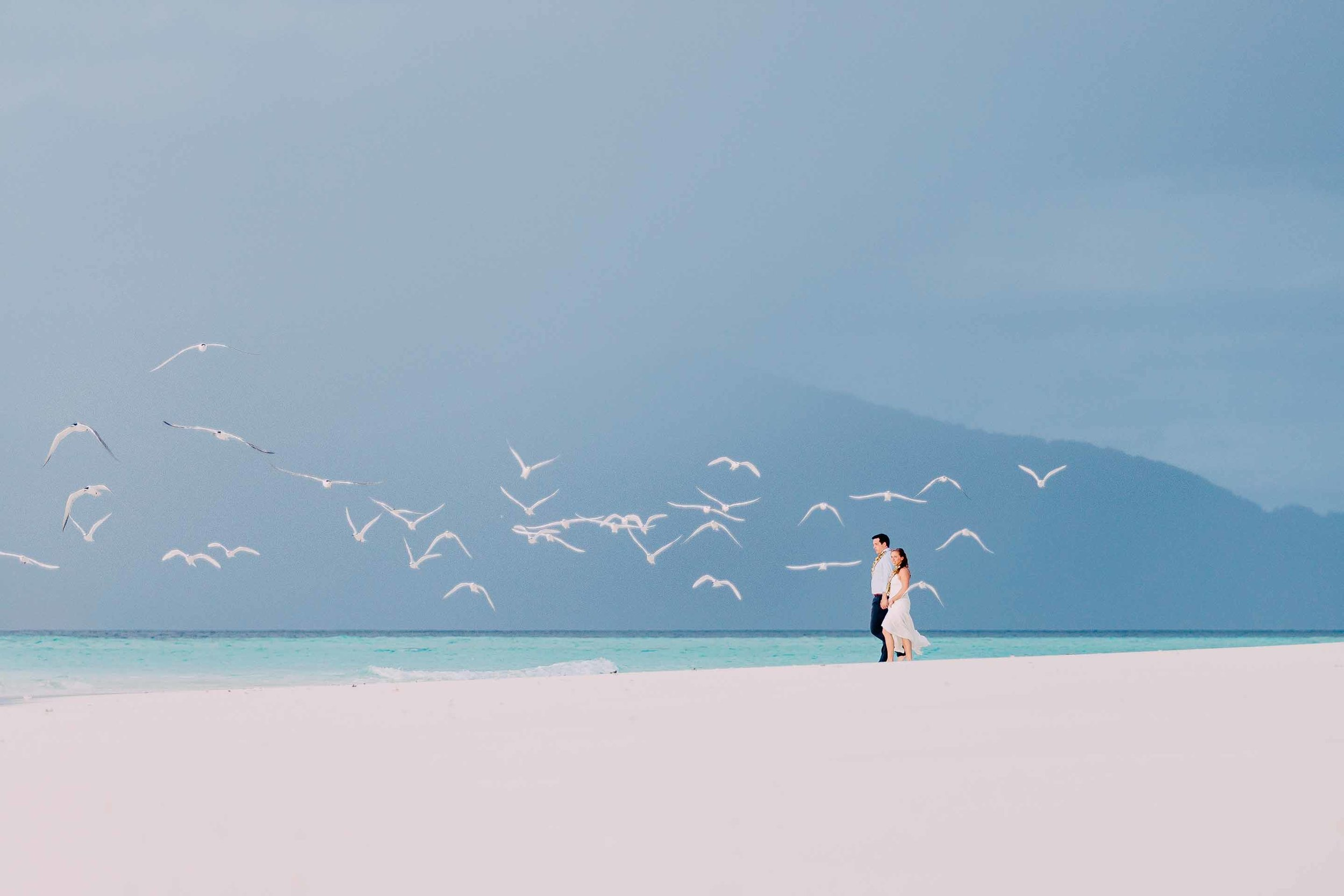 Flock of white gulls take flight as the bride and groom explore their own piece of paradise where they got married.