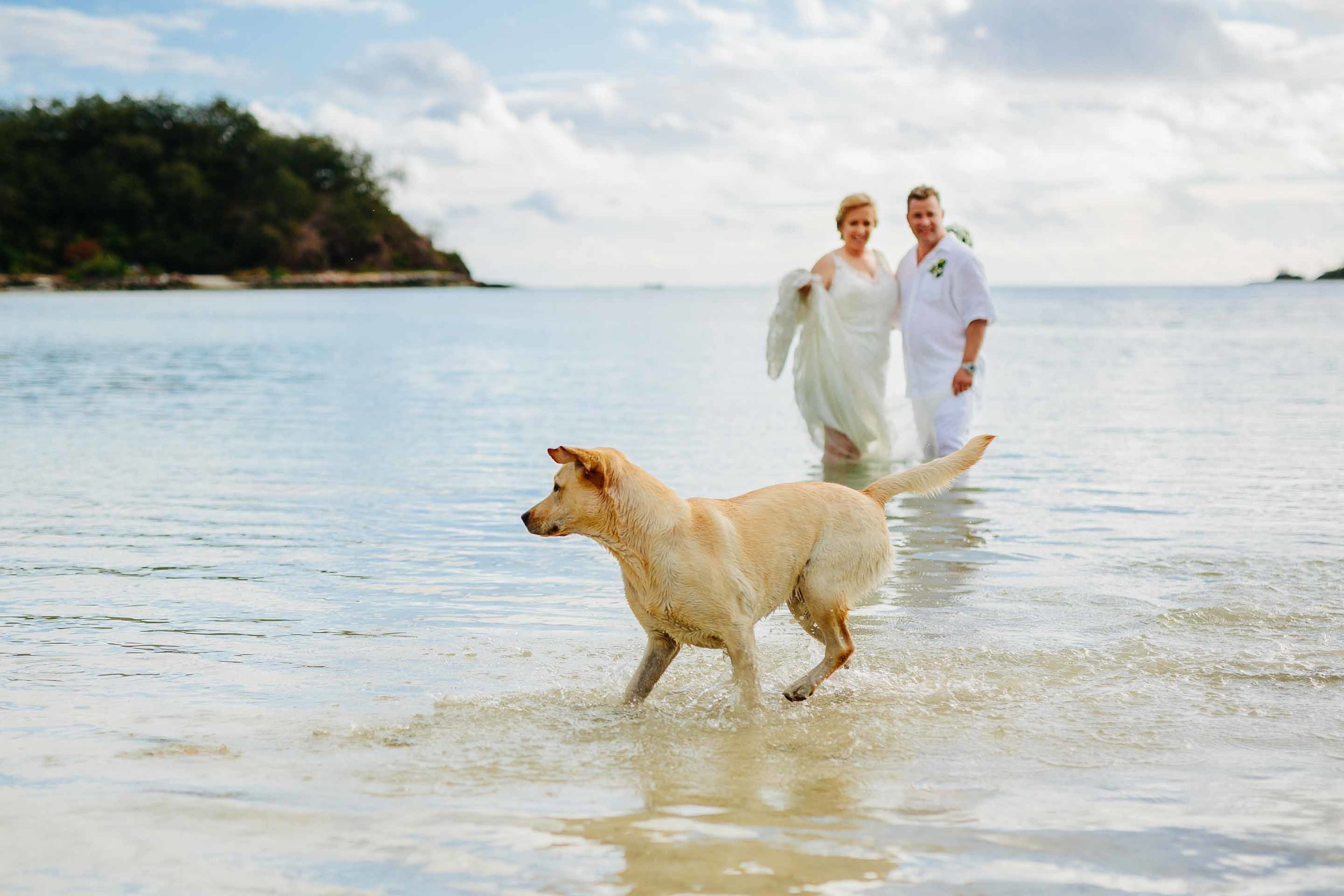 coco the resort dog chasing fish in front of the newly weds