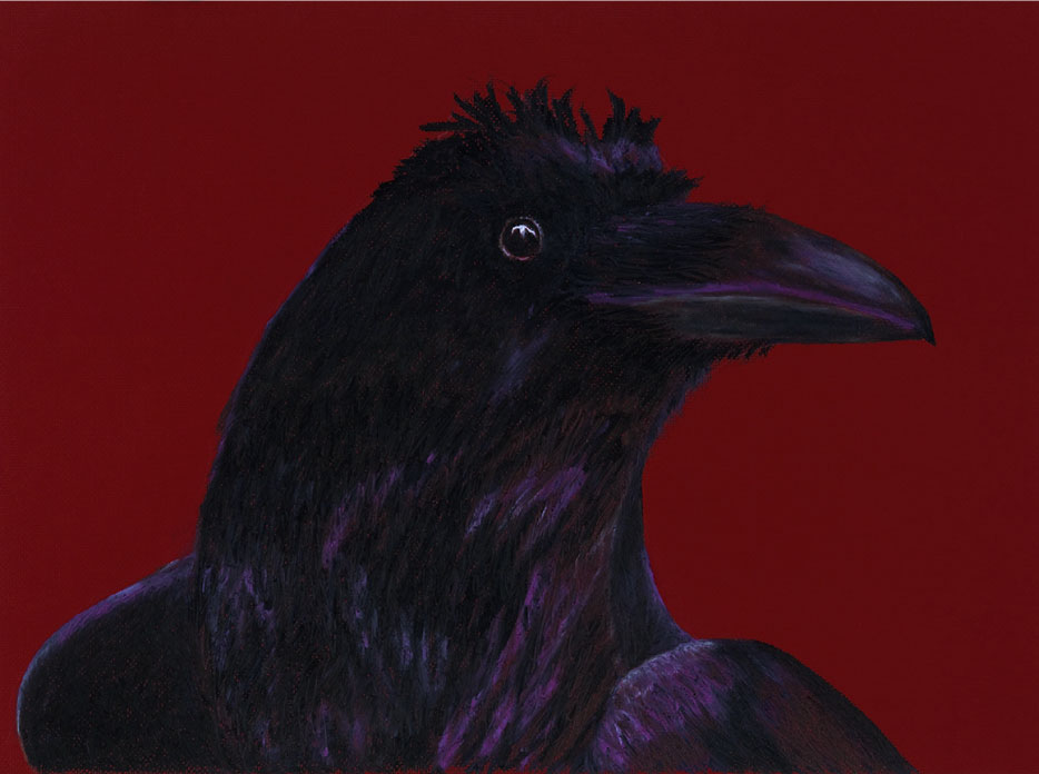 "Wise Guy, 18""x26"" drawing.  Crows are brilliant, playful birds."