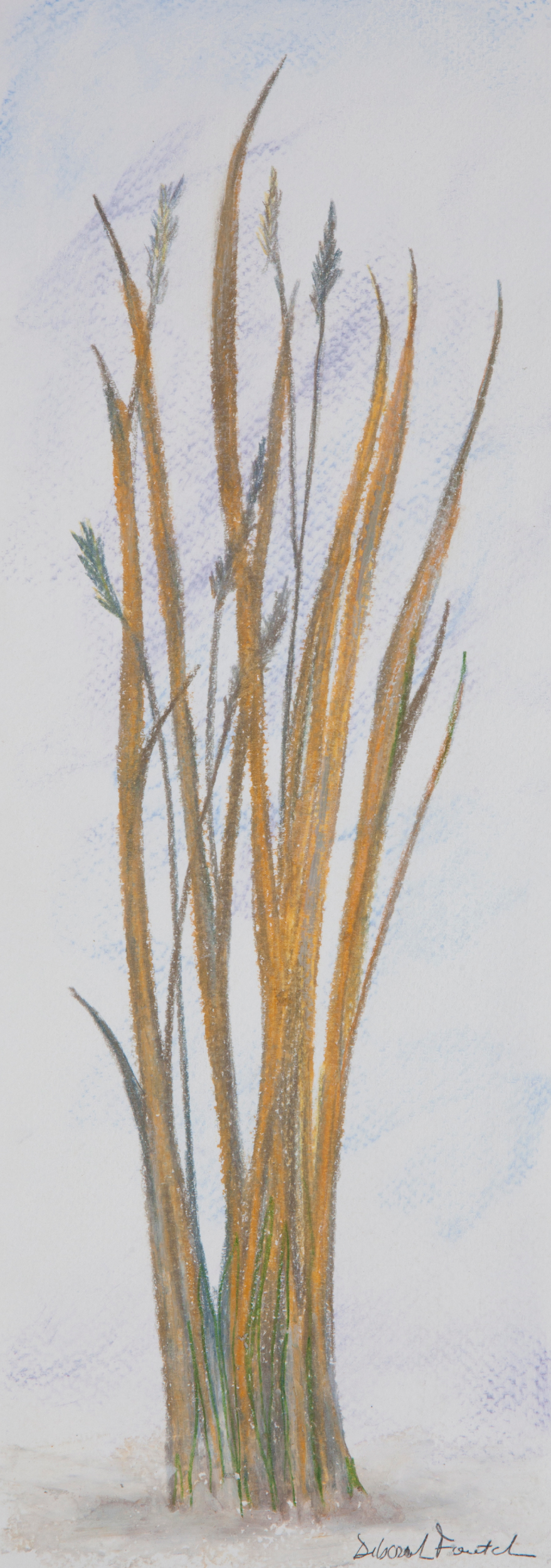 "Native Grasses, 14""x6"" drawing. A drawing  of native Minnesota grasses."