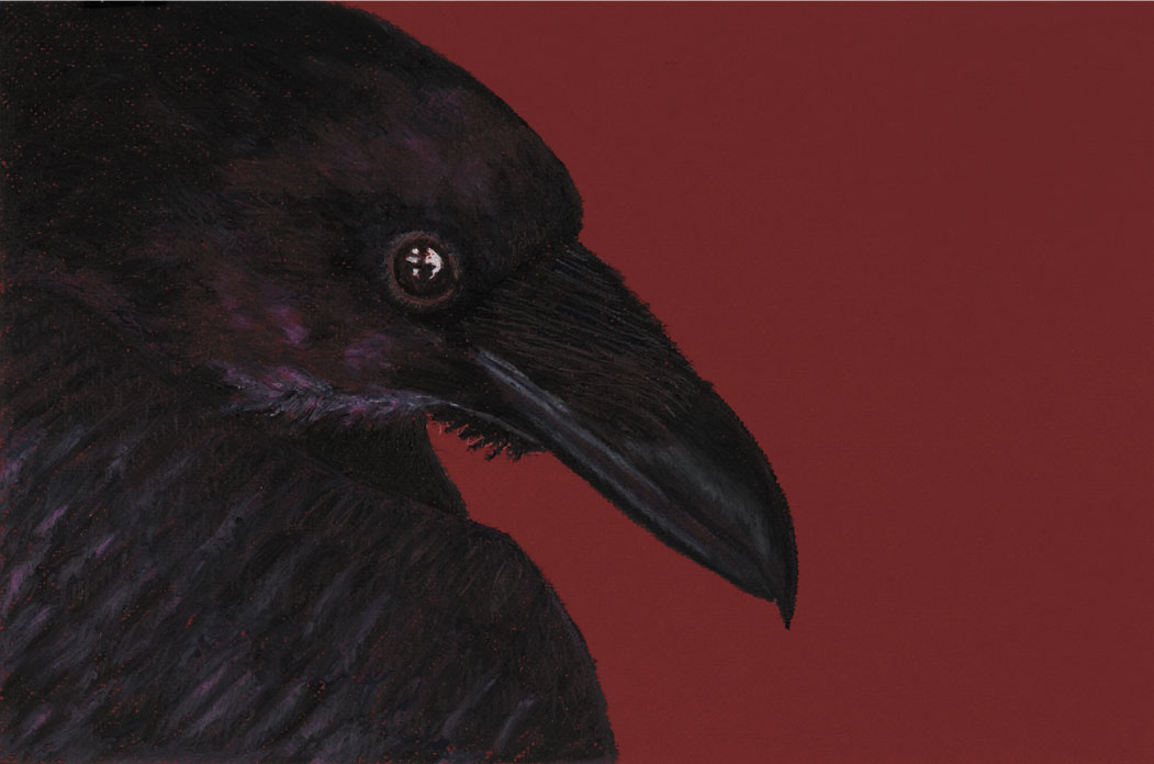"Mulling Crow, 14""x24"" drawing. A drawing of a problem solving bird."