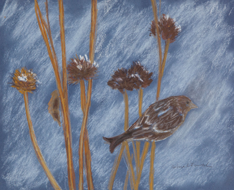 """Cone Flowers, 12""""x14"""" drawing.   A drawing of plants that feed the birds that stay with us in winter."""