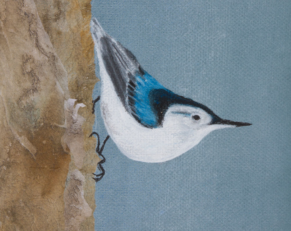 "Nuthatch, 8""x10"" drawing .  A drawing of the nuthatch, one of the birds that stay with us in winter."