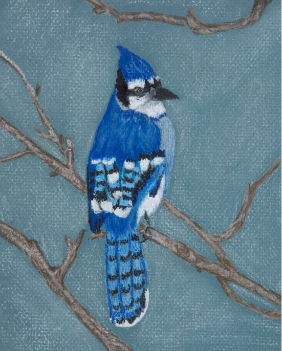 Blue Jay, drawing.