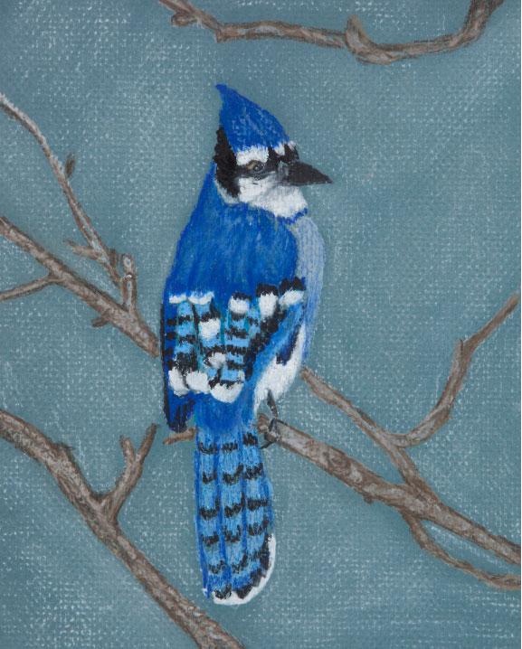 Blue Jay, drawing.