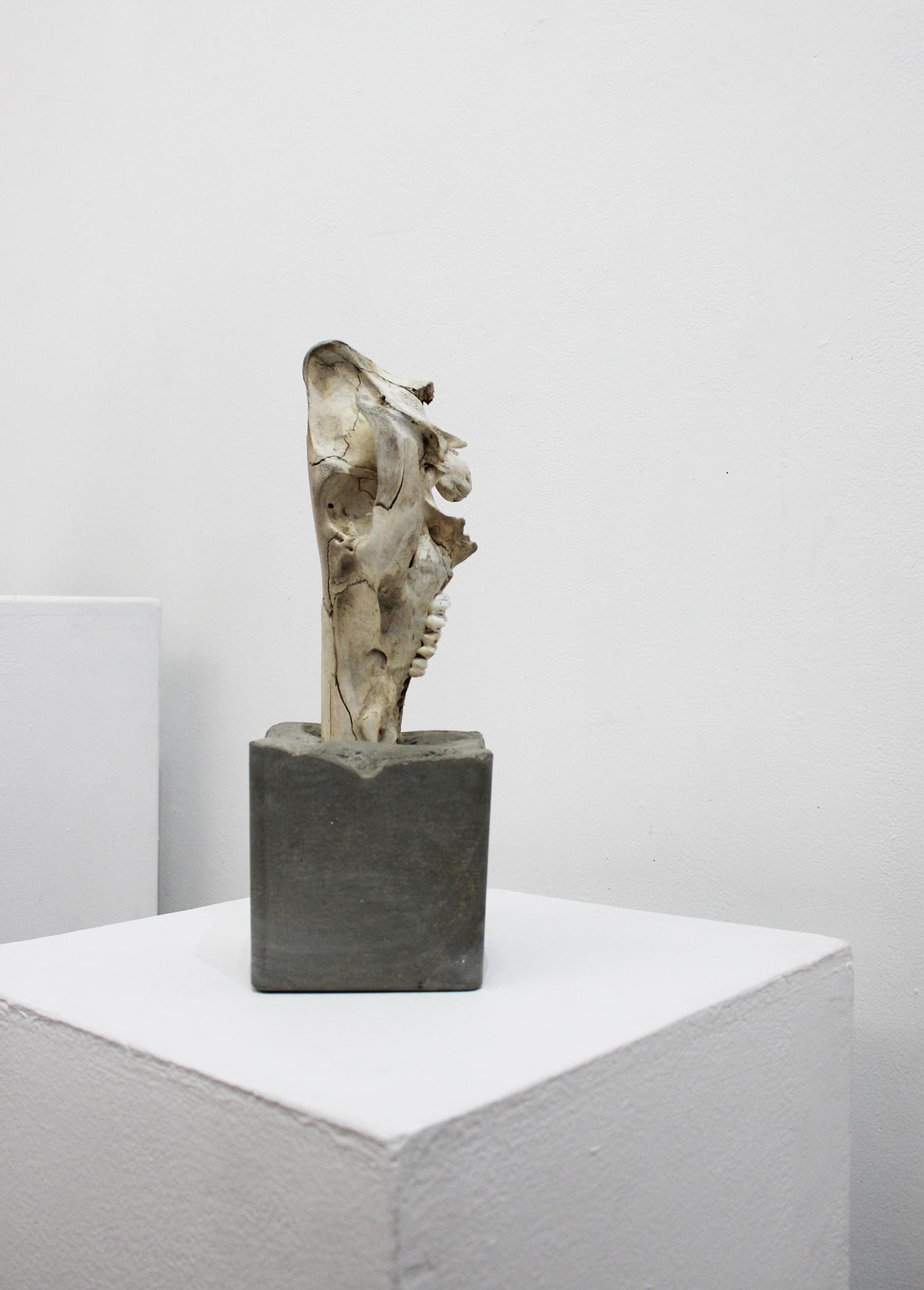 'Submerge, (Polished, a lesson on talking), Christopher Phelan-White, pig skull, polished cement $1500