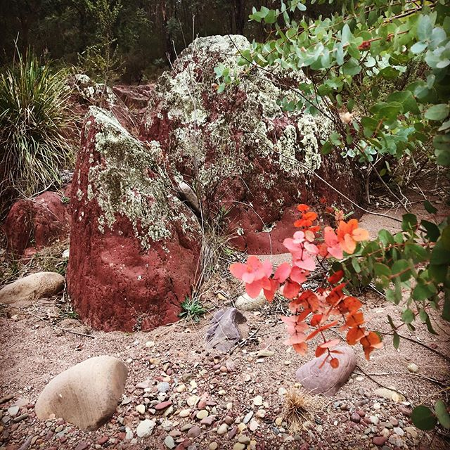 Inspirational colours of the Australian bush. #artistontour #encausticart #australianbush #cantwaittopaintit