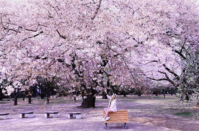 Learn to cherish small little things in life as that would passed so fast just like this #cherryblossom / / I normally would want to do more outfit related post. It this cherry blossom is just too dreamy that I would have to share this! I only shot this once, which cherry blossom never fails 🌸🌸🌸🌸🌸🌸