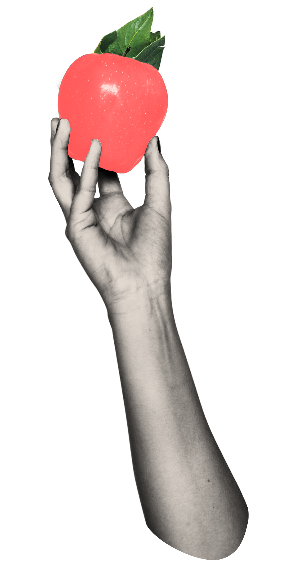 Home Graphic_Hand_190316.png