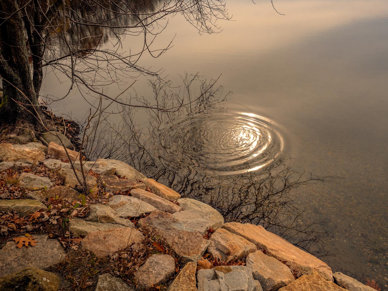 pond edge-2.jpg