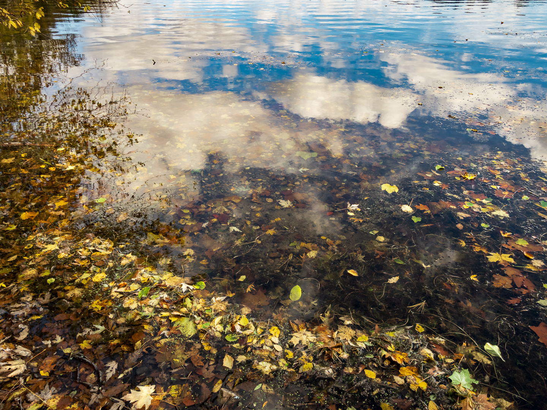 pond edge-12.jpg