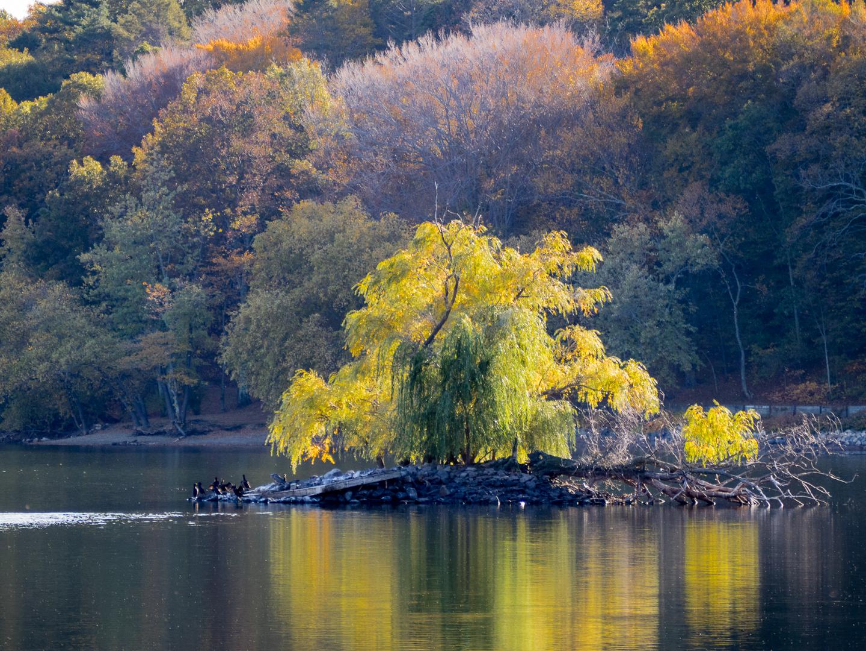 pond island-4.jpg