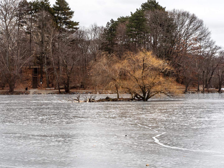 pond island-12.jpg