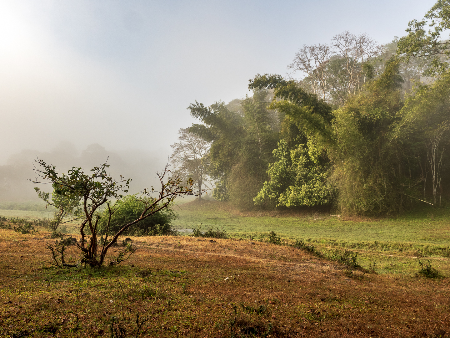 Dawn in the Periyar Tiger Reserve