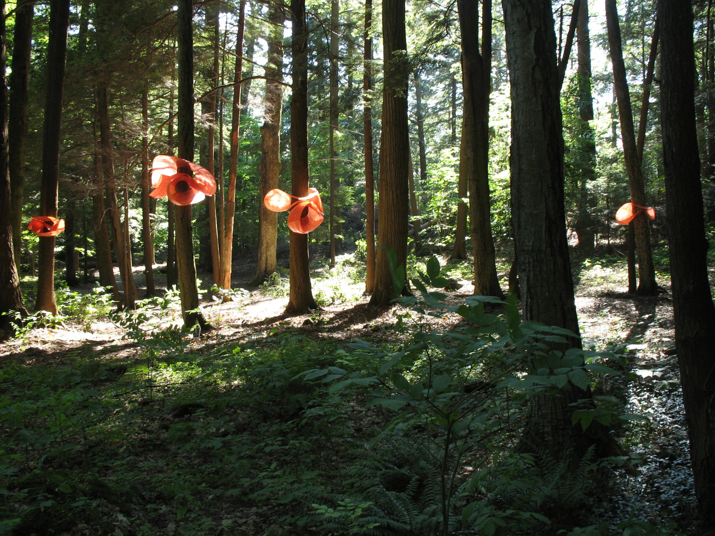 Mushroom Grove – 2006
