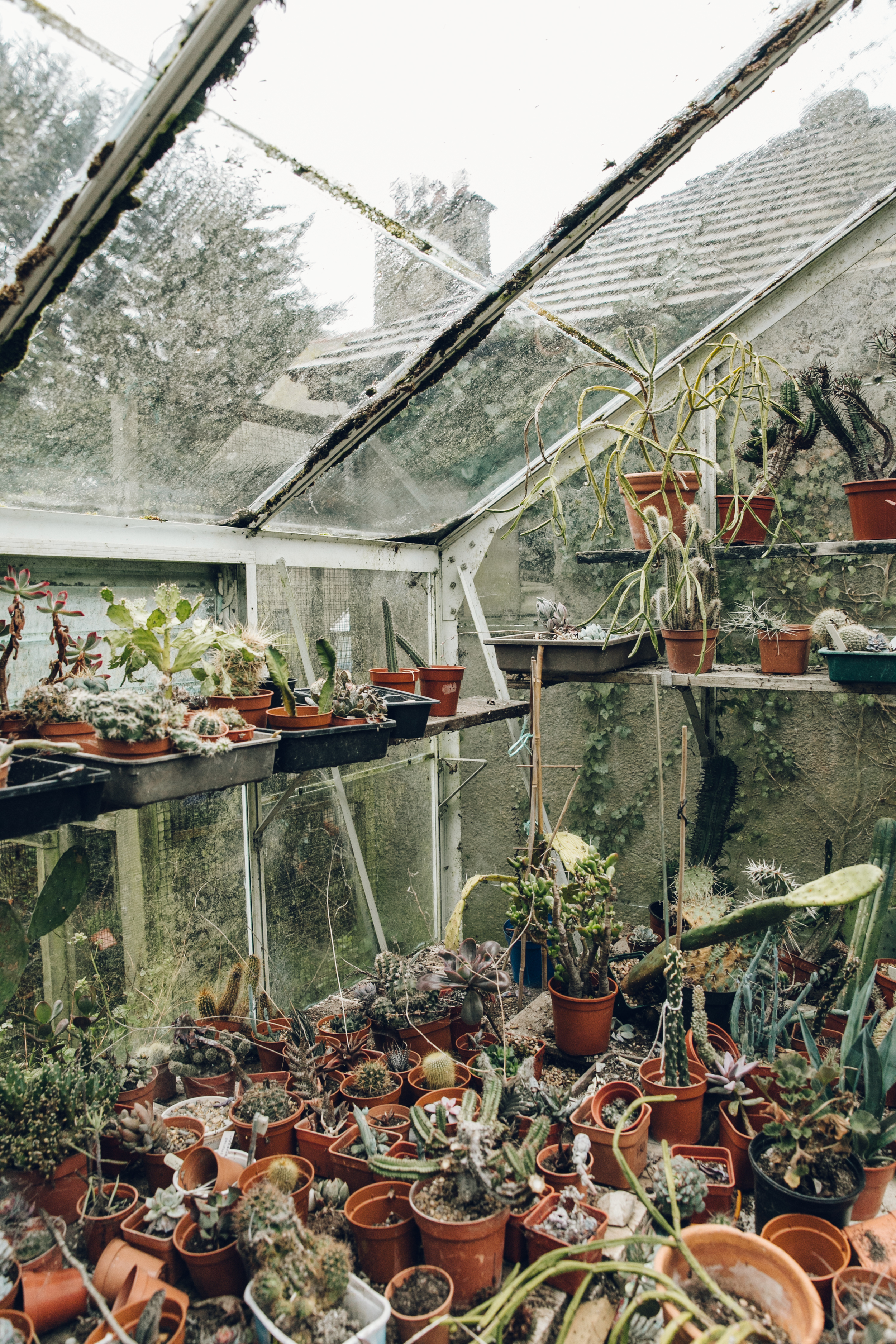 Cacti For Sale — Robin Hood's Bay - Richard's collection of glasshouses sits behind some hedging at the end of his drive and was a welcome cover from the rain when we visited. He told us that he started a long time ago by buying a single cacti for each of his 5 children and that