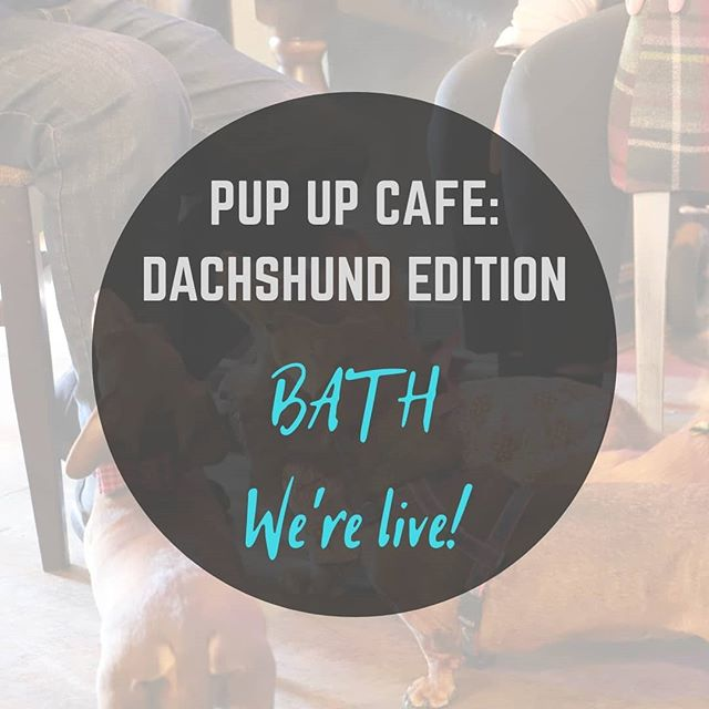 Bath - we're coming for you soon! (August 4th @revolutionbath) Know anyone near the beautiful city of Bath that would benefit from a day of sausages?! Tag away! 🐶🌭 •  Link for tickets at: pupup.cafe/tickets •  #puppuccino #pupupcafe #dachshund #dachshunds #dog #dachshundsofinstagram #dogs #dogsofinstagram #sausagedog #doxie #dachshundlove #dachshundoftheday #dachshundpuppy #puppy #dogstagram #love #teckel #sausagedogcentral #wienerdog #doxiesofinstagram #instadog #minidachshund #weinerdog #cute #miniaturedachshund #doxielove #puppylove