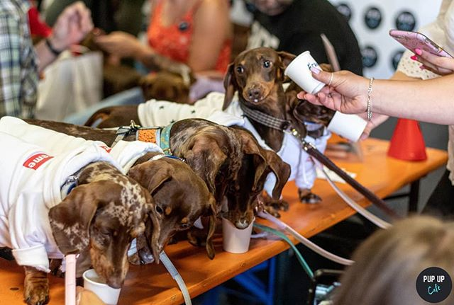 We think the@_sausage.squad_ enjoyed their puppuccinos at our Leeds event a few weeks ago! 🐶#squadgoals •  Photo by: @pawz_petphotography •  #puppuccino #pupupcafe #dachshund#dachshunds #dog #dachshundsofinstagram #dogs #dogsofinstagram #sausagedog #doxie #dachshundlove #dachshundoftheday #dachshundpuppy #puppy #dogstagram #love #teckel #sausagedogcentral #wienerdog #doxiesofinstagram #instadog #minidachshund #weinerdog #cute #miniaturedachshund #doxielove #puppylove