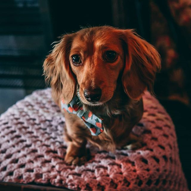 Bath we had such a blast today! Thanks to everyone that came down, LOADS of sausages through the doors today!🐶🌭🐶 Here's a few sneek peek photostaken by a wonderful hobby photographer! • 📸: MousyMacro on Flickr • #dachshund#dachshunds #dog #dachshundsofinstagram #dogs #dogsofinstagram #sausagedog #doxie #dachshundlove #puppuccino #pupupcafe#dachshundoftheday #dachshundpuppy #puppy #dogstagram #love #teckel #sausagedogcentral #wienerdog #doxiesofinstagram #instadog #minidachshund #weinerdog #cute #miniaturedachshund #doxielove #puppylove