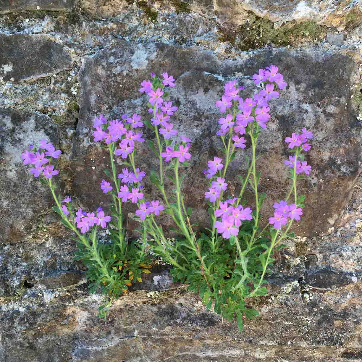 purple-flowers-in-concrete-bloom.jpg