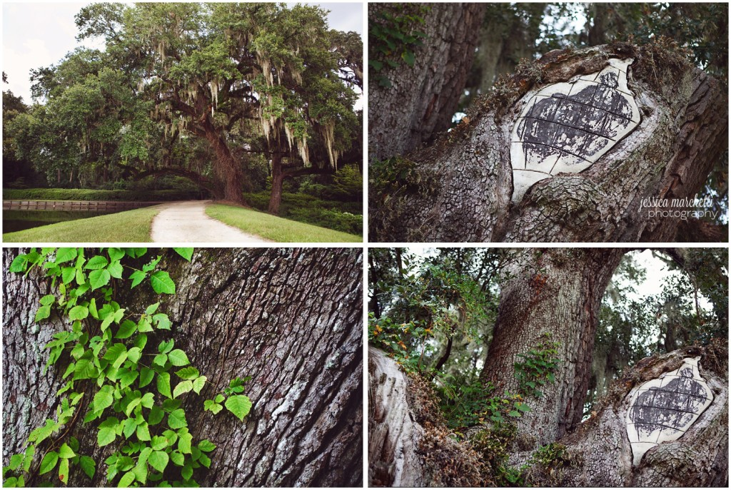 Charleston South Carolina Images_1