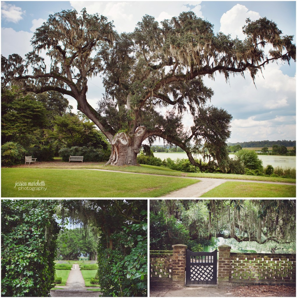 Charleston South Carolina Images_2