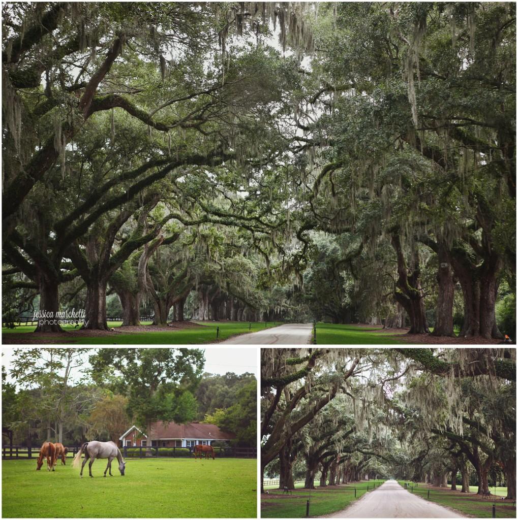 Charleston South Carolina Images_28