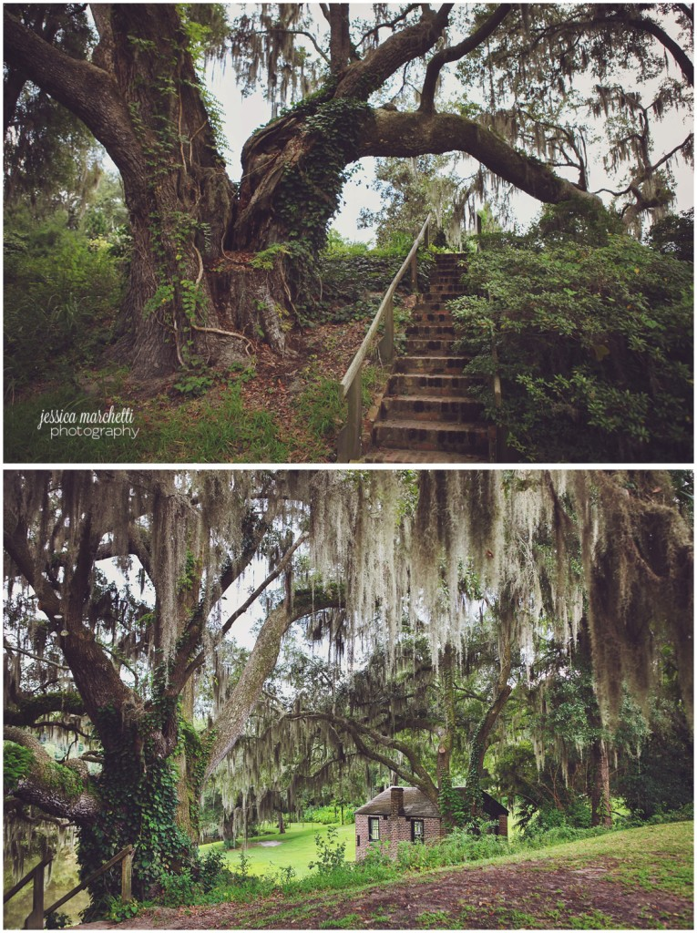 Charleston South Carolina Images_7