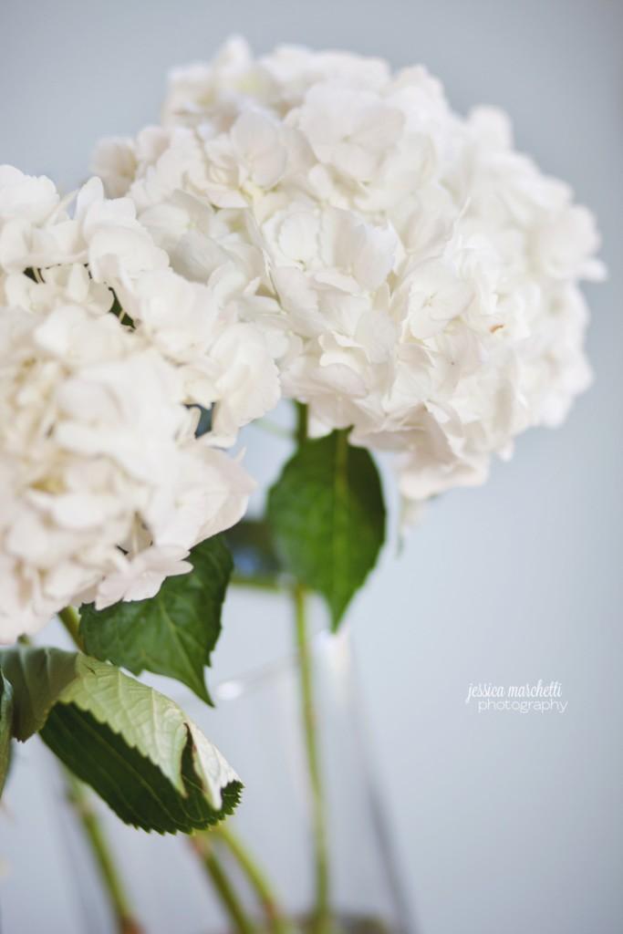 Hydrangea Print Photography_0003