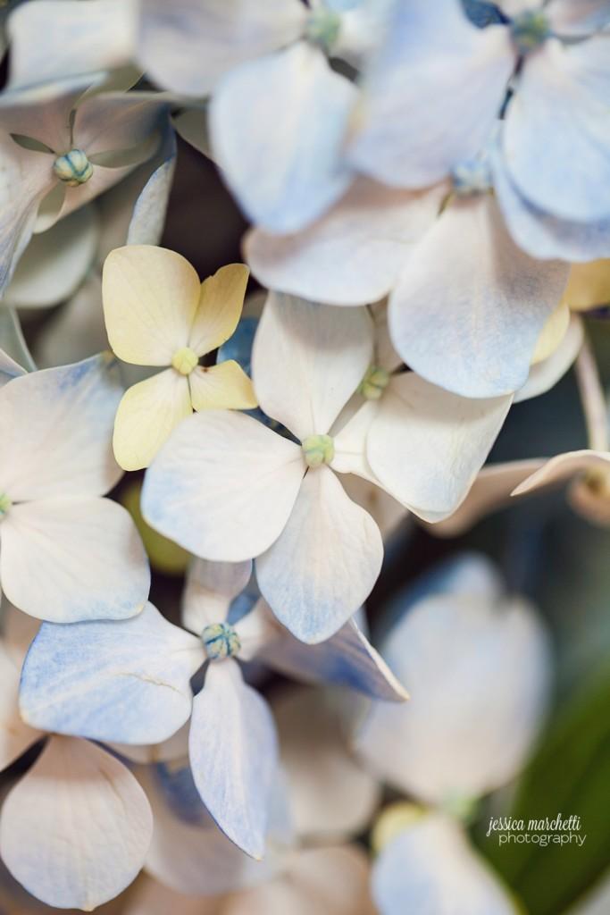Hydrangea Print Photography_0006