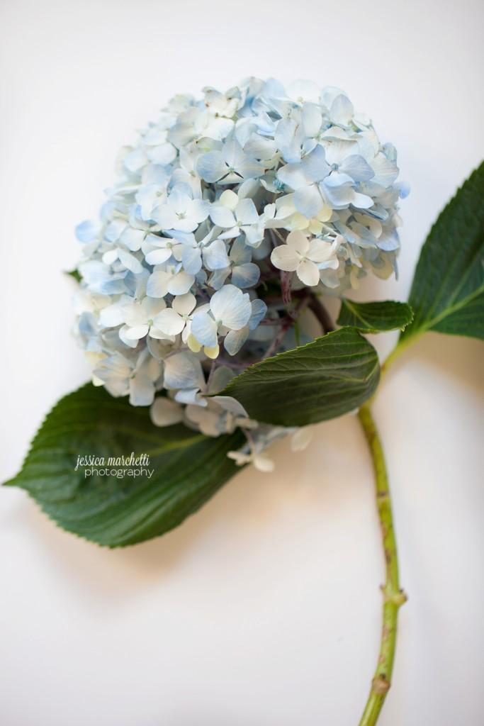 Hydrangea Print Photography_0007