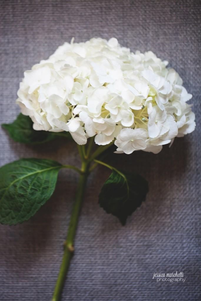 Hydrangea Print Photography_0008