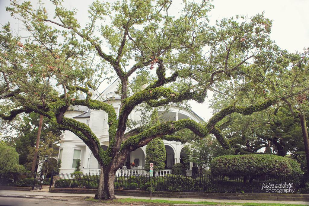 Historic Charleston White House Live Oak Tree