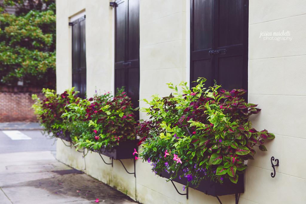 Window Bow Photography Wall Art
