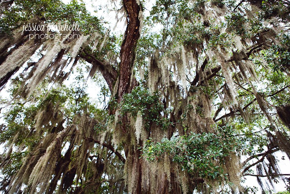 Spanish Moss Charleston Photography