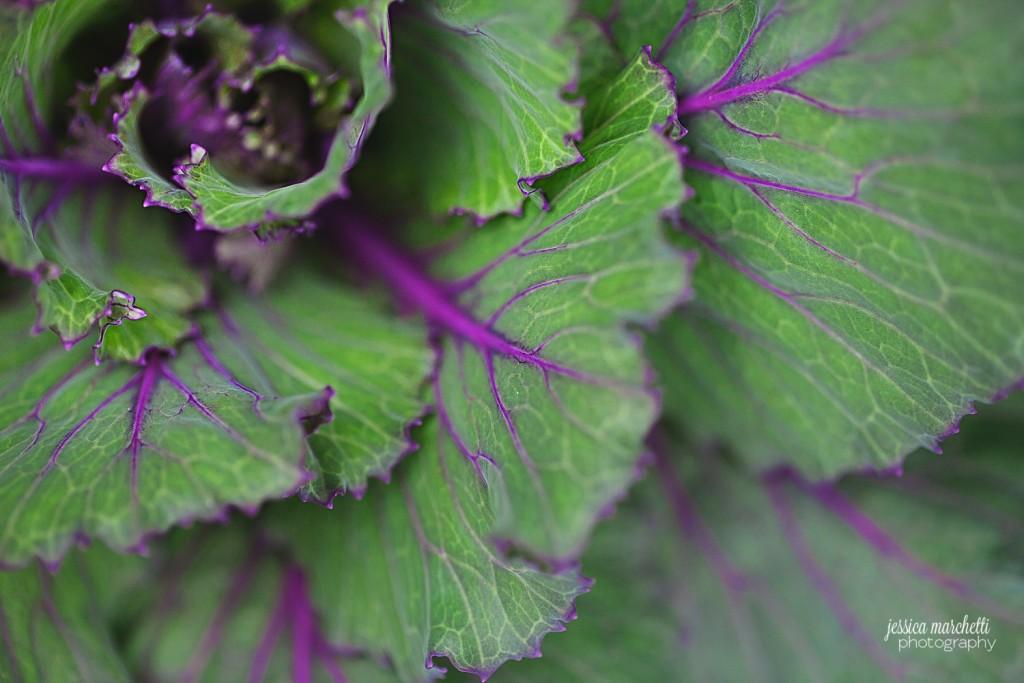 Macro Plant Photography_0004
