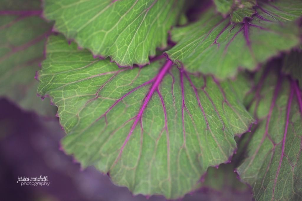 Macro Plant Photography_0005