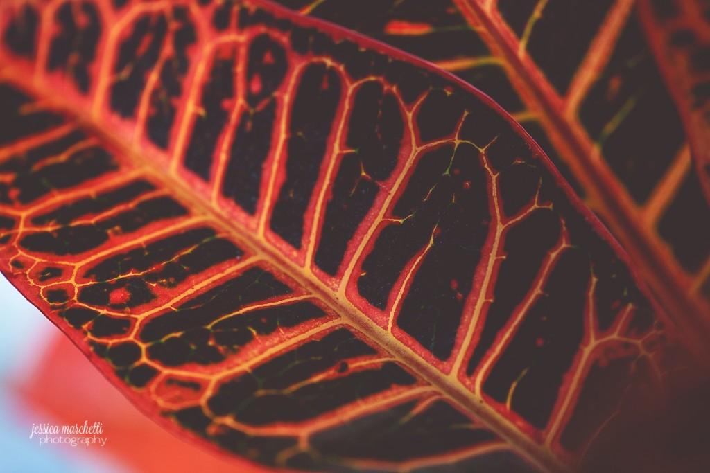 Macro Plant Photography_0006
